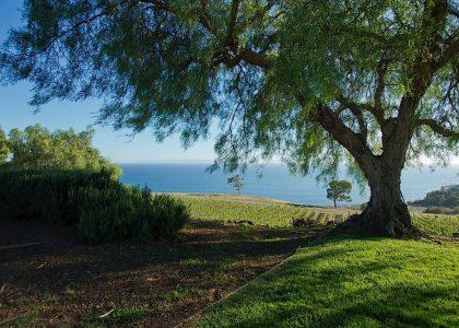 California Dreamin' at the Catalina View Gardens